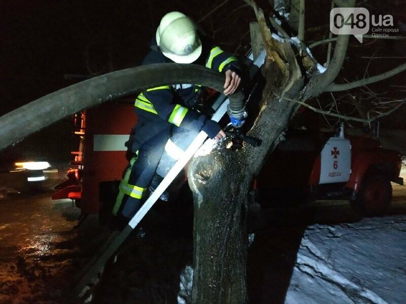 В Одессе что бы потушить одно дерево пожарники израсходовали более 2 тонн воды, - ФОТО, фото-7