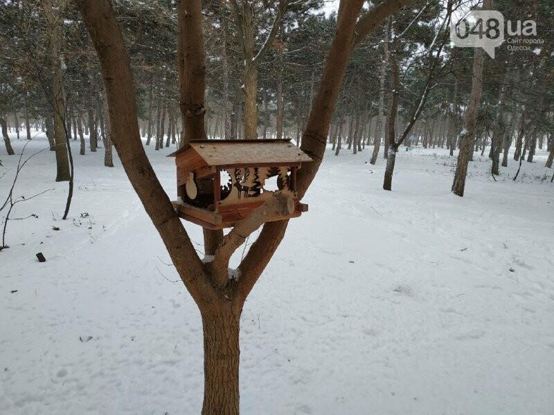 Зима в одесском Парке Победы: снежный фоторепортаж, - ФОТО, фото-19