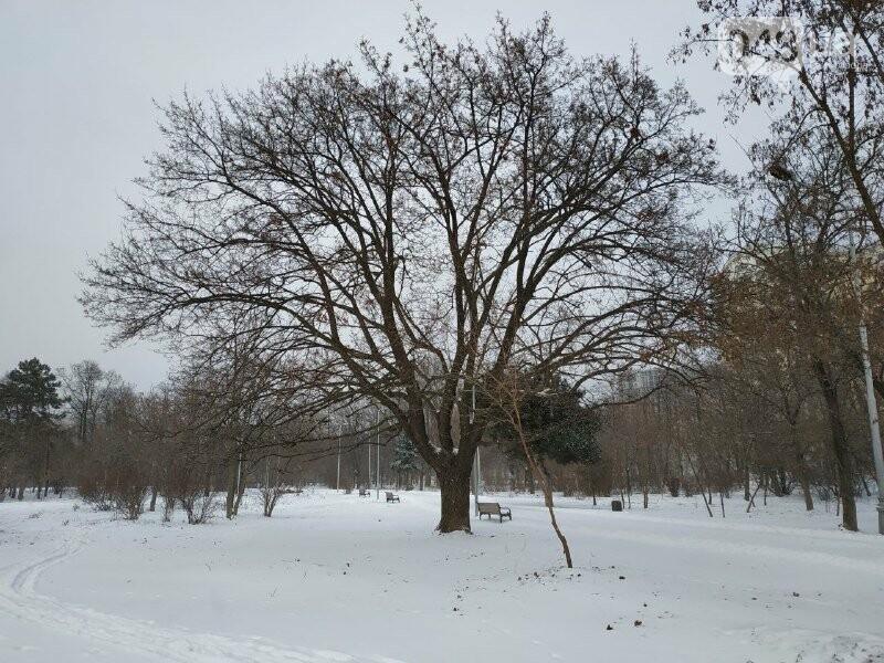 Зима в одесском Парке Победы: снежный фоторепортаж, - ФОТО, фото-24