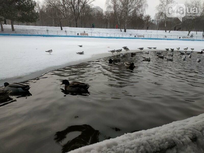 Зима в одесском Парке Победы: снежный фоторепортаж, - ФОТО, фото-7
