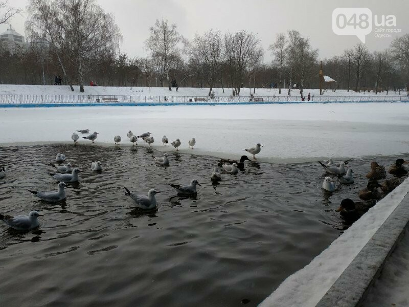 Зима в одесском Парке Победы: снежный фоторепортаж, - ФОТО, фото-10