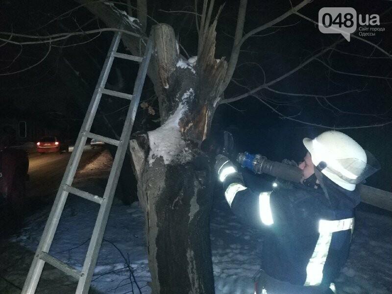 В Одессе что бы потушить одно дерево пожарники израсходовали более 2 тонн воды, - ФОТО, фото-8
