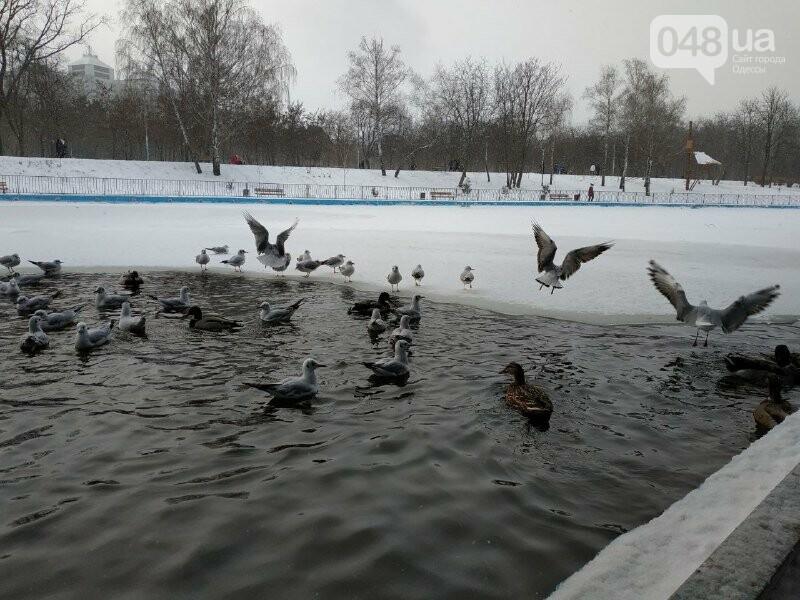 Зима в одесском Парке Победы: снежный фоторепортаж, - ФОТО, фото-9