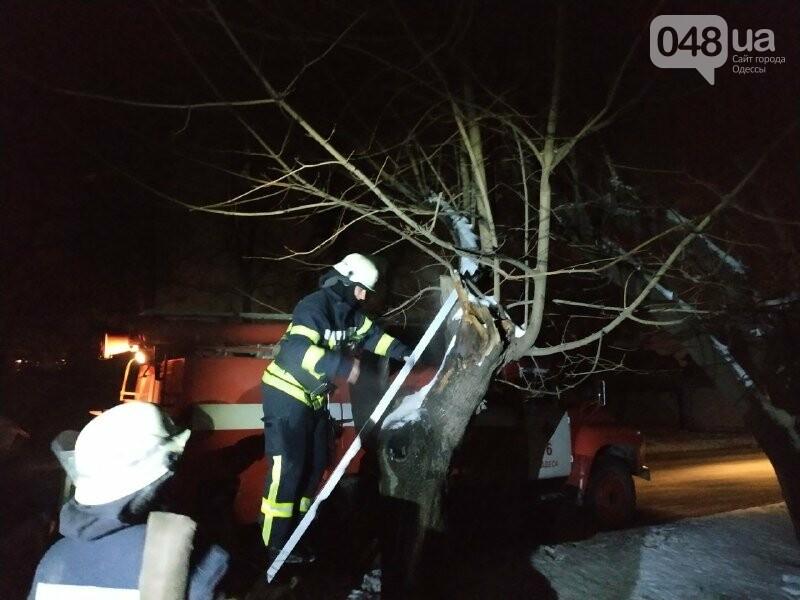 В Одессе что бы потушить одно дерево пожарники израсходовали более 2 тонн воды, - ФОТО, фото-4