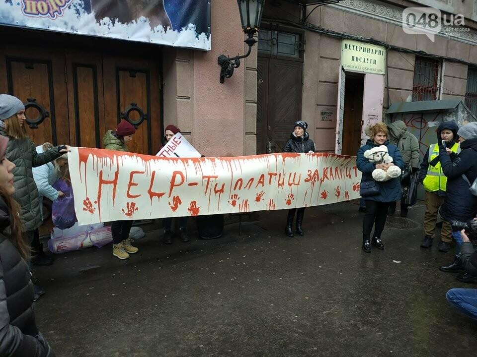 Акция за цирк в Одессе без животных: как начиналась и чем закончилась, - ФОТО, ВИДЕО, фото-14