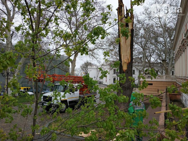 Рухнувшее дерево возле одесской мэрии