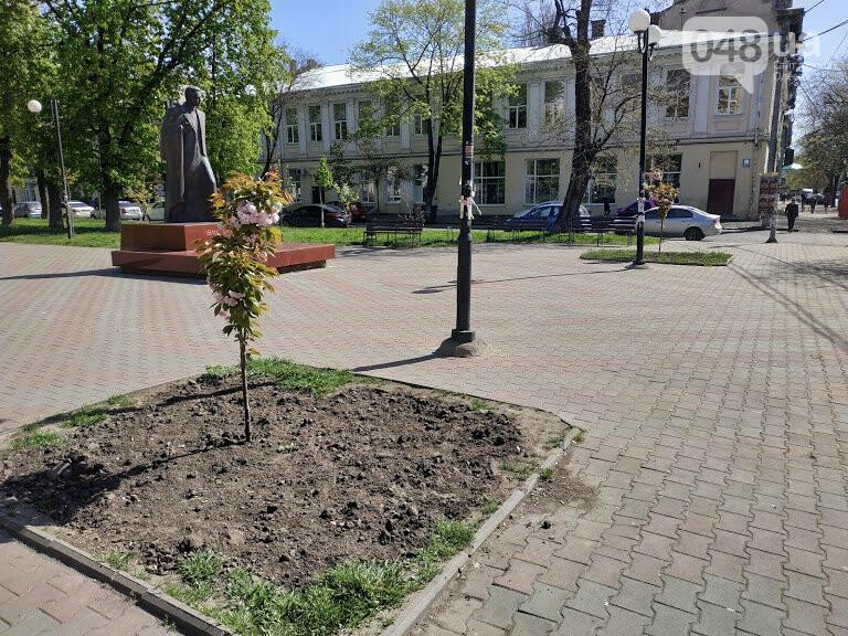 Цветущая сакура на Александровском проспекте