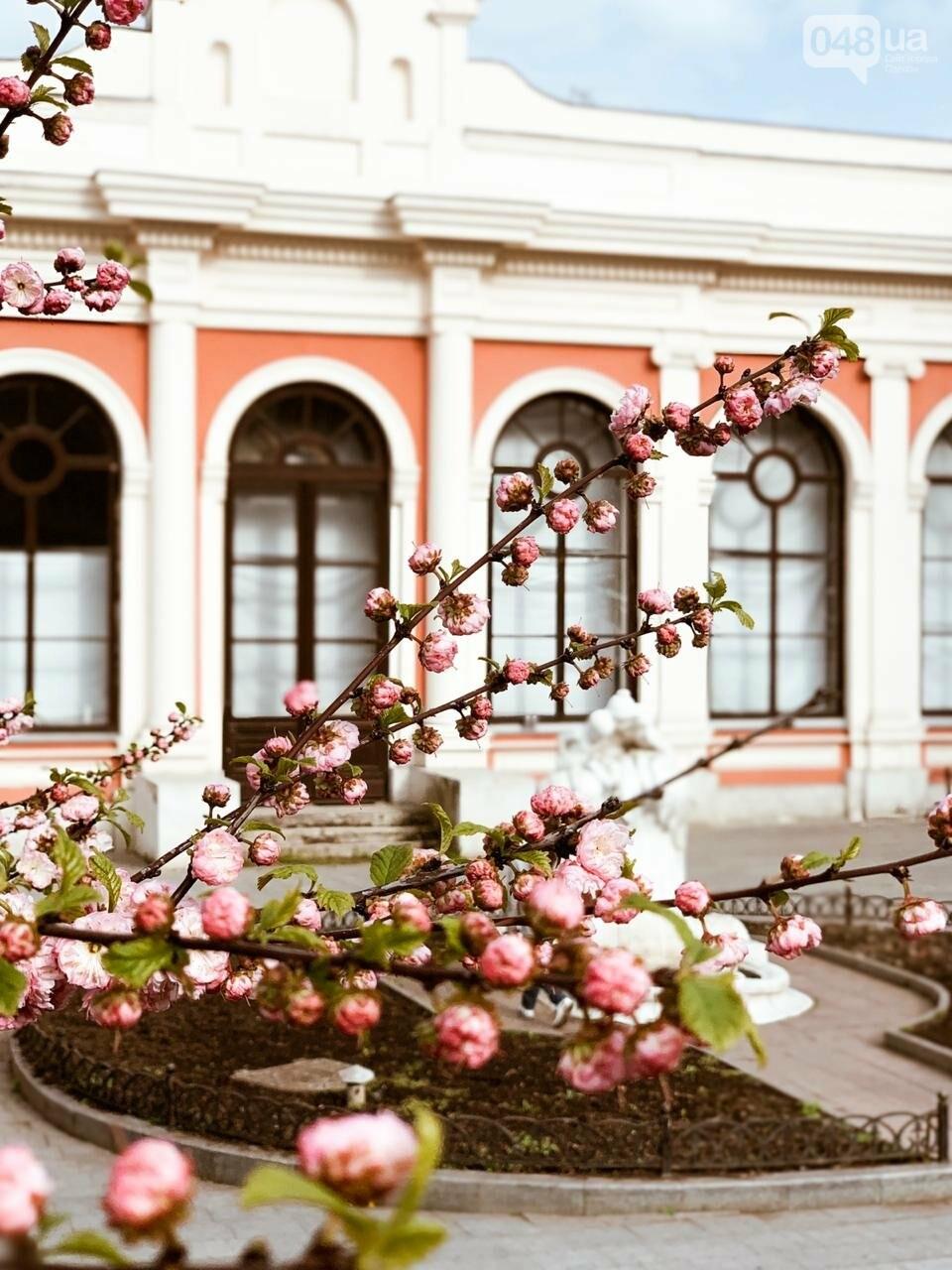 ТОП Экскурсий по Одессе, фото-33
