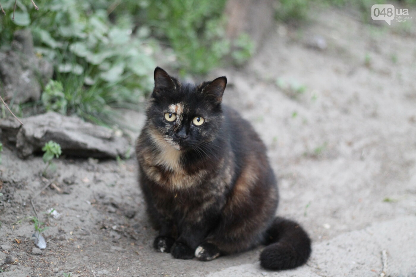 Уличные коты Одессы