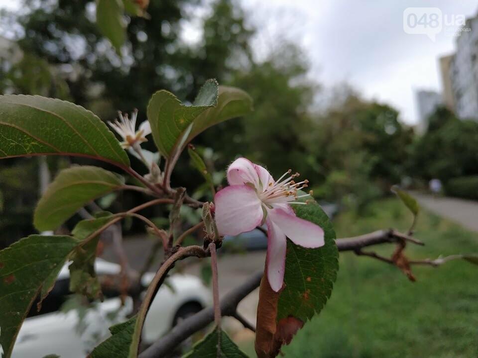В Одессе в сентябре зацвели деревья: экологи назвали причины, - ФОТО, фото-7