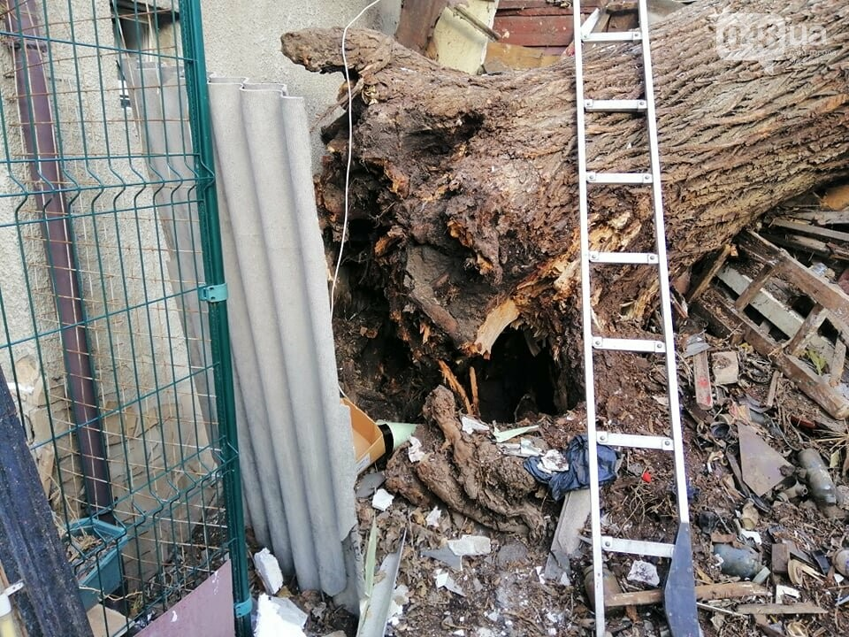На Молдаванке дерево разрушило дом и заблокировало женщину, - ФОТО, ВИДЕО, ОБНОВЛЕНО , фото-9