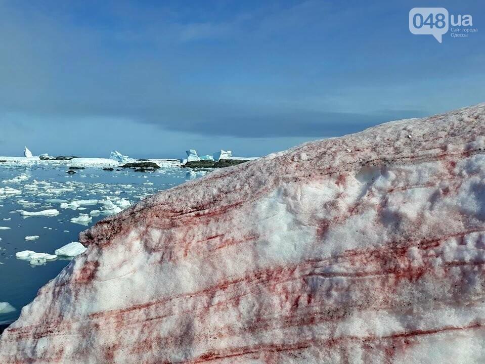 Малиновый снег в Антарктиде