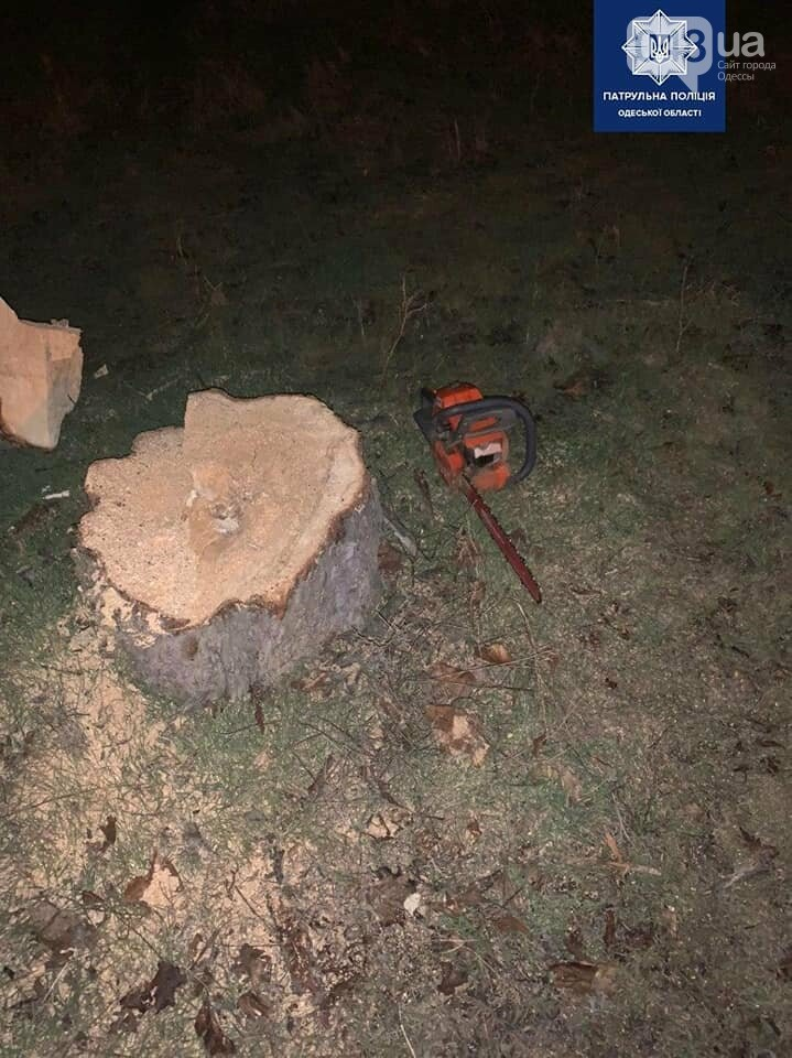 Ночью в Одессе мужчина пилил деревья на Французском бульваре, фото-2