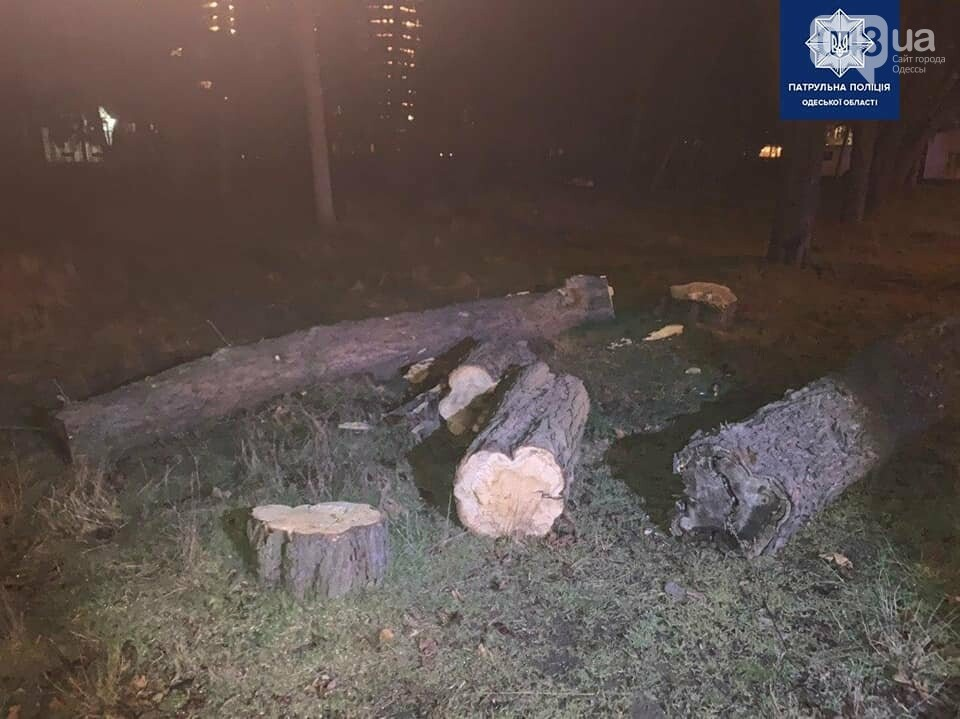 Ночью в Одессе мужчина пилил деревья на Французском бульваре, фото-1