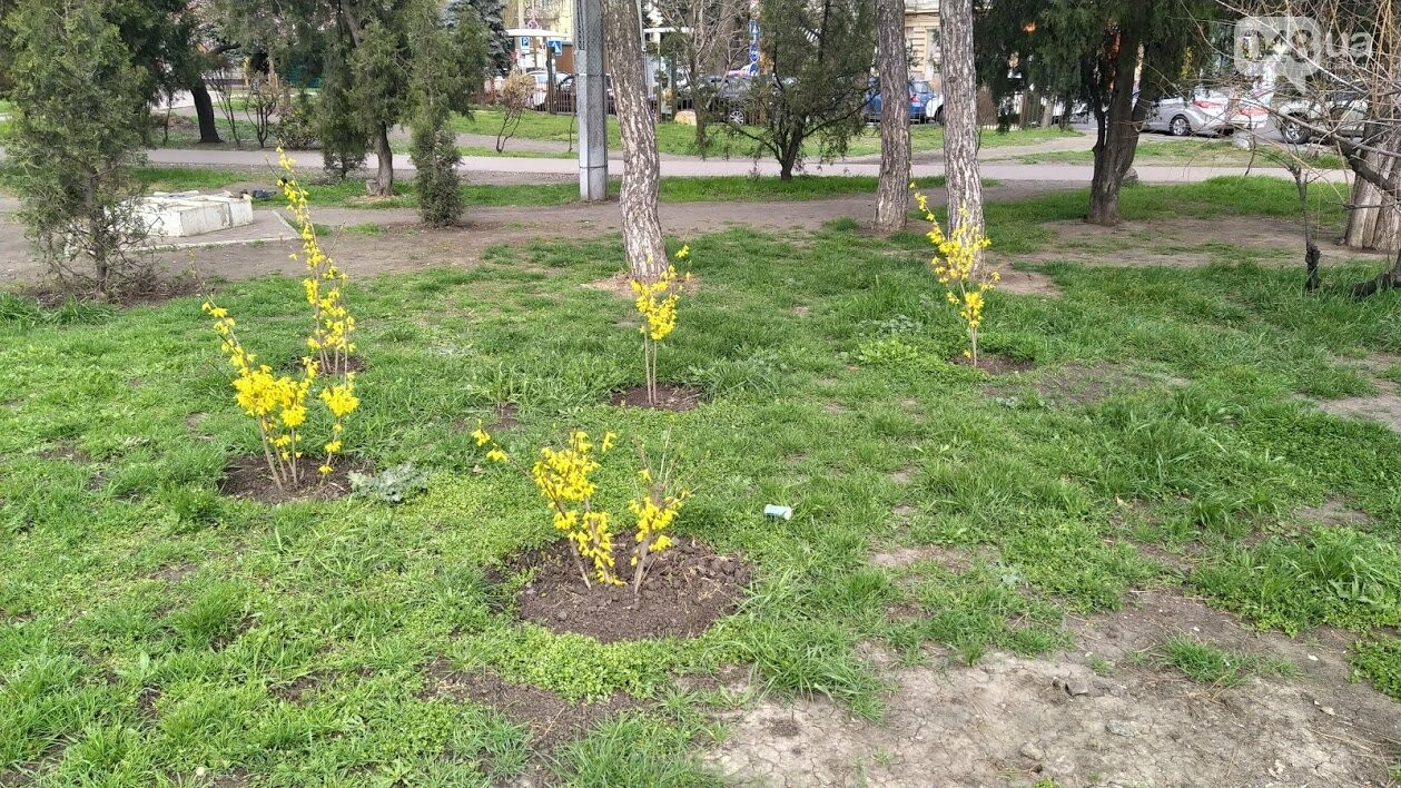 Расцветающая Одесса.