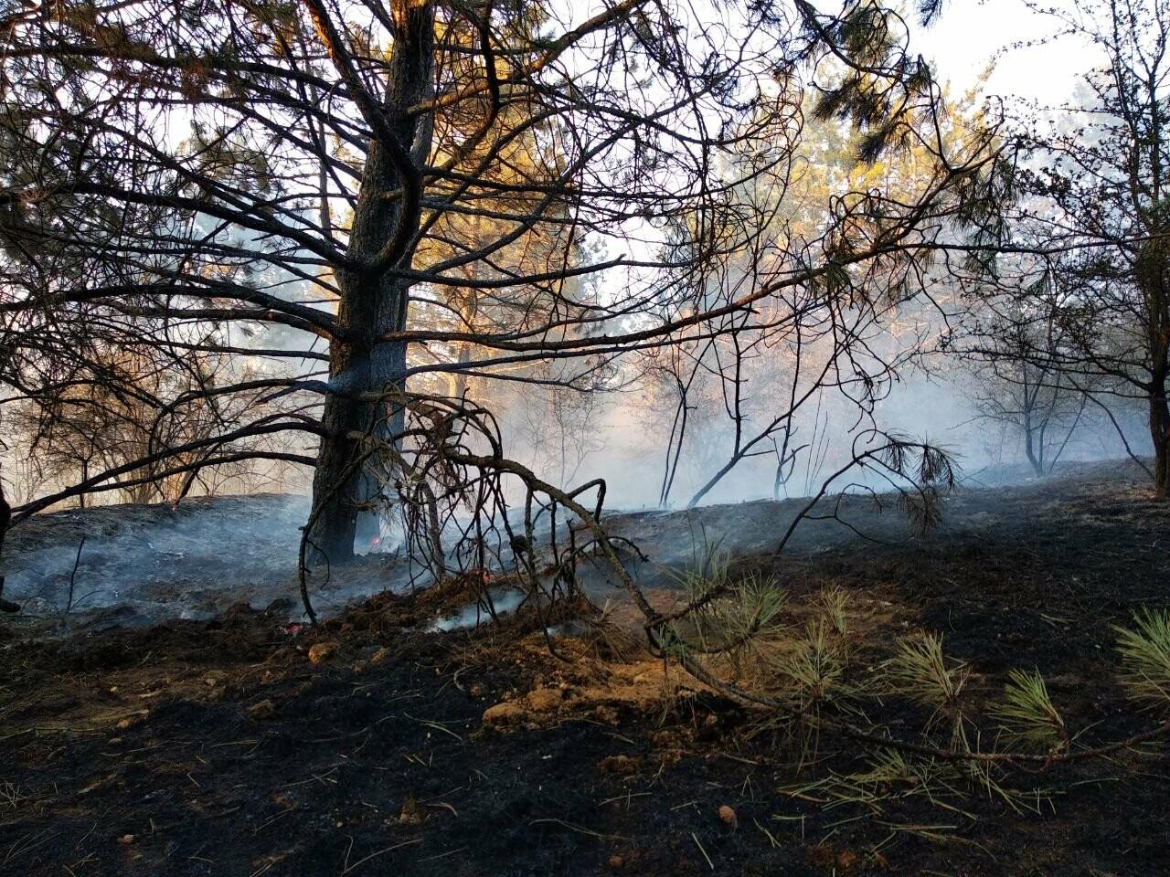 Лесной пожар в Одесской области, Ирина Галич