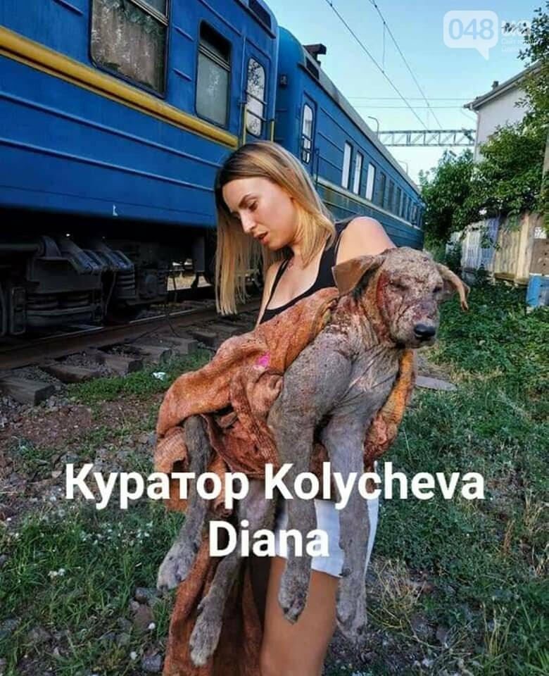Одесскую зоозащитницу растерзала собака, девушка в реанимации, - ФОТО, фото-2