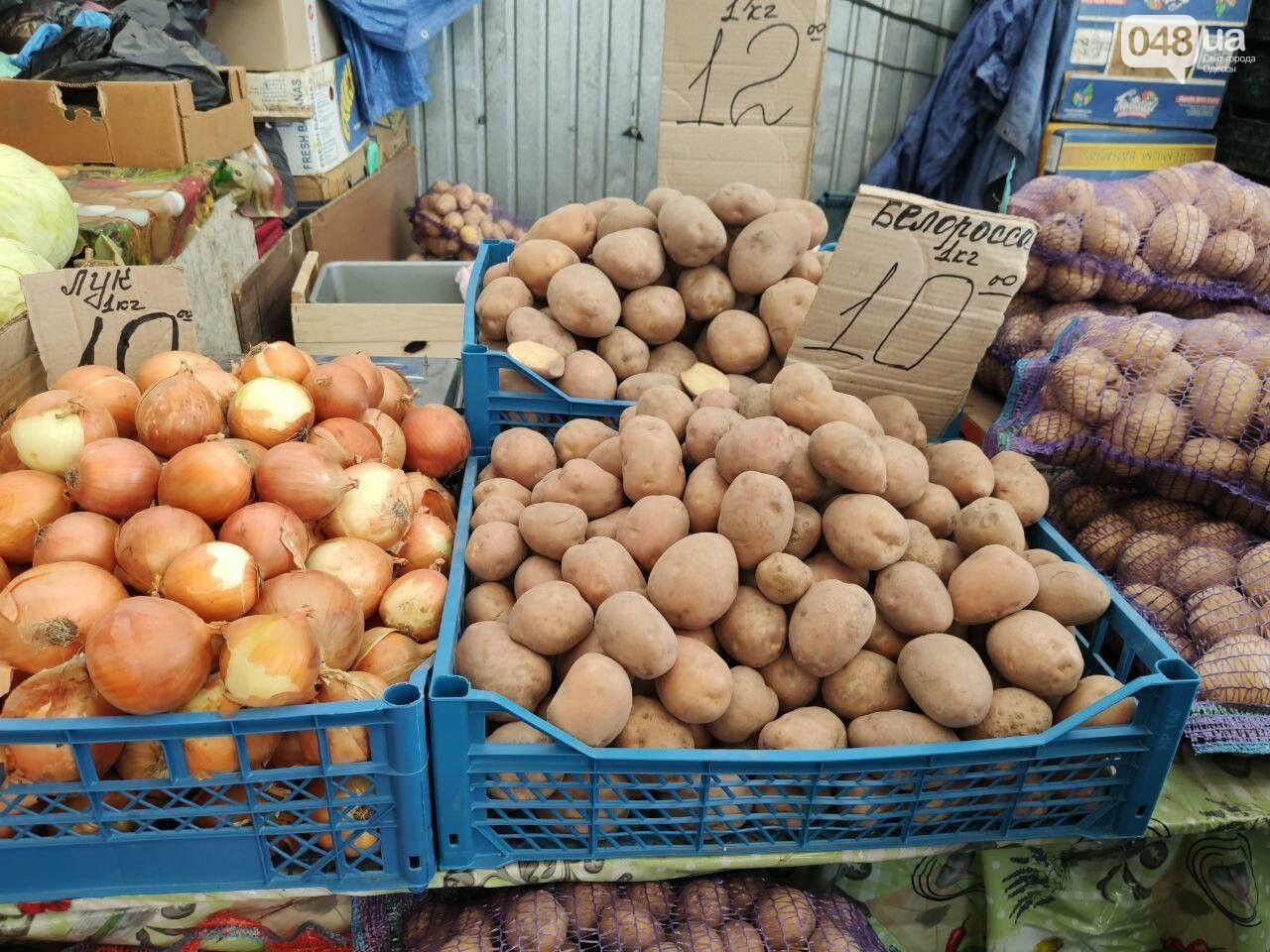 Почем в Одессе фрукты и овощи: актуальные цены Привоза в этот четверг, - ФОТО, фото-8