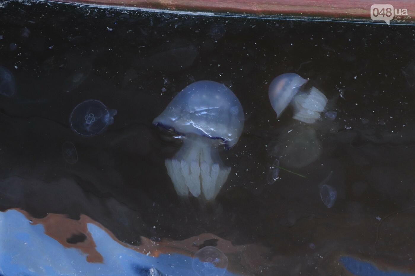 Одессу атаковали медузы, купаться в море опасно, - ФОТО, фото-5