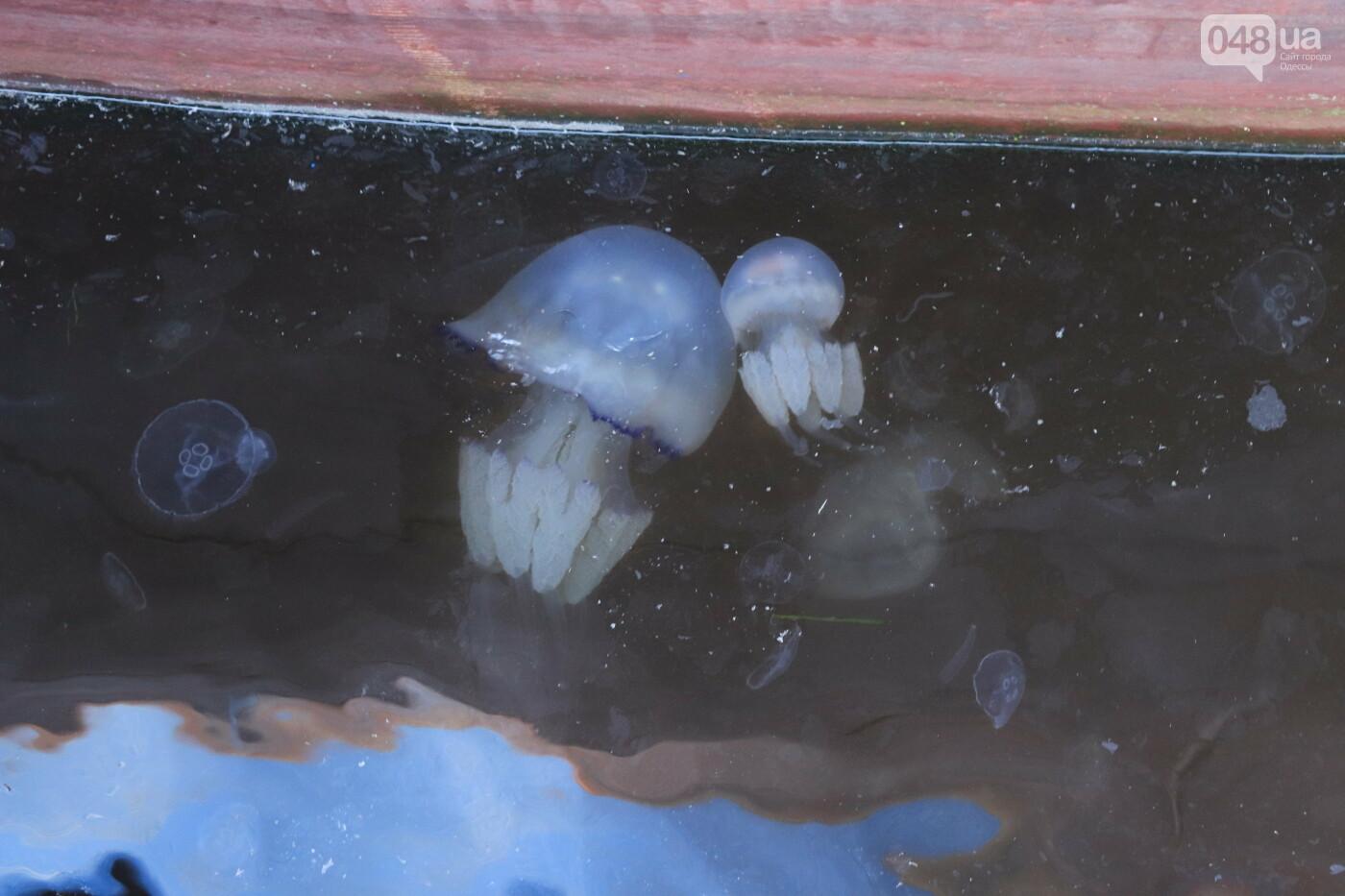 Одессу атаковали медузы, купаться в море опасно, - ФОТО, фото-6