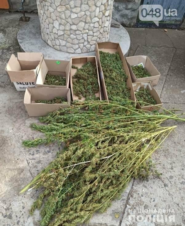 В Одесской области мужчина выращивал кусты конопли в огороде, - ФОТО, фото-1