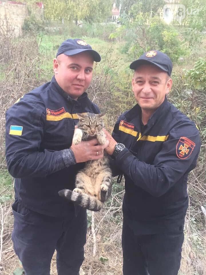Под Одессой спасали кота, который застрял в бетонной плите,..., фото-55