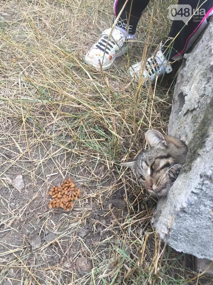 Под Одессой спасали кота, который застрял в бетонной плите,..., фото-11