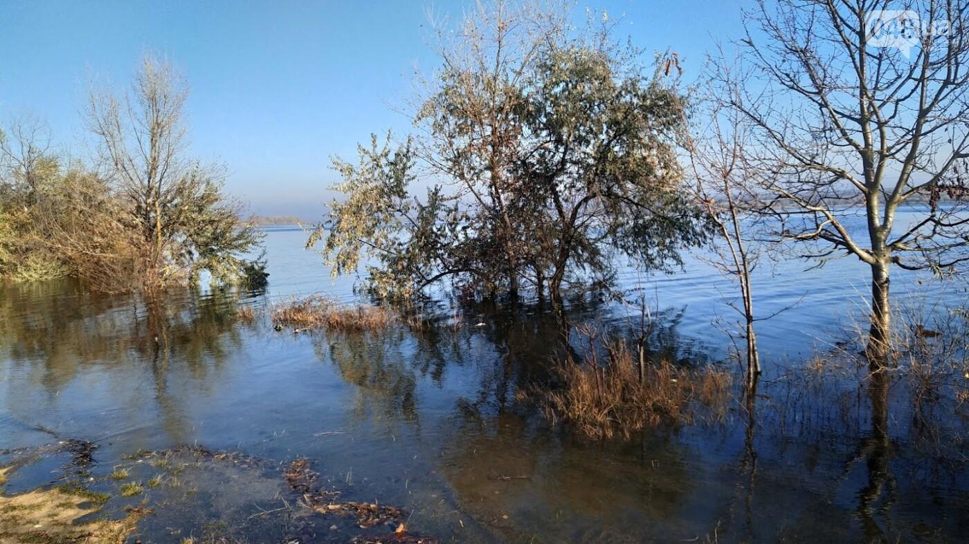 Затопленные, деревья и дороги: в Одесской области водохранилище вышло из берегов, - ФОТО, фото-18, ФОТО: Александр Жирносенко