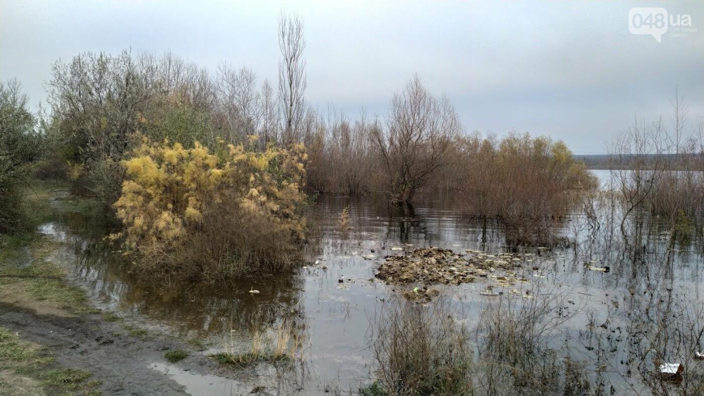 Затопленные, деревья и дороги: в Одесской области водохранилище вышло из берегов, - ФОТО, фото-16, ФОТО: Александр Жирносенко
