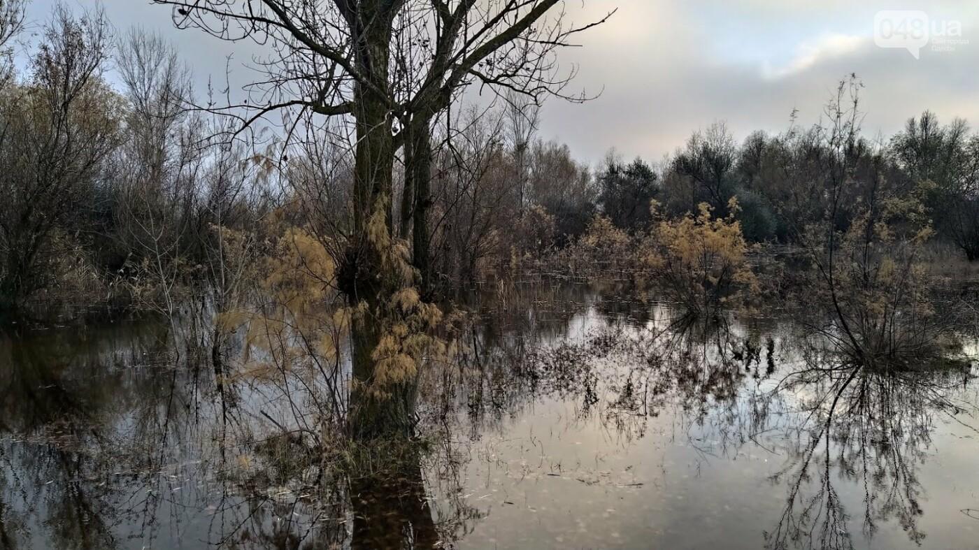 Затопленные, деревья и дороги: в Одесской области водохранилище вышло из берегов, - ФОТО, фото-11, ФОТО: Александр Жирносенко