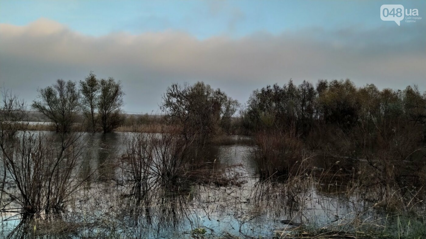 Затопленные, деревья и дороги: в Одесской области водохранилище вышло из берегов, - ФОТО, фото-9, ФОТО: Александр Жирносенко