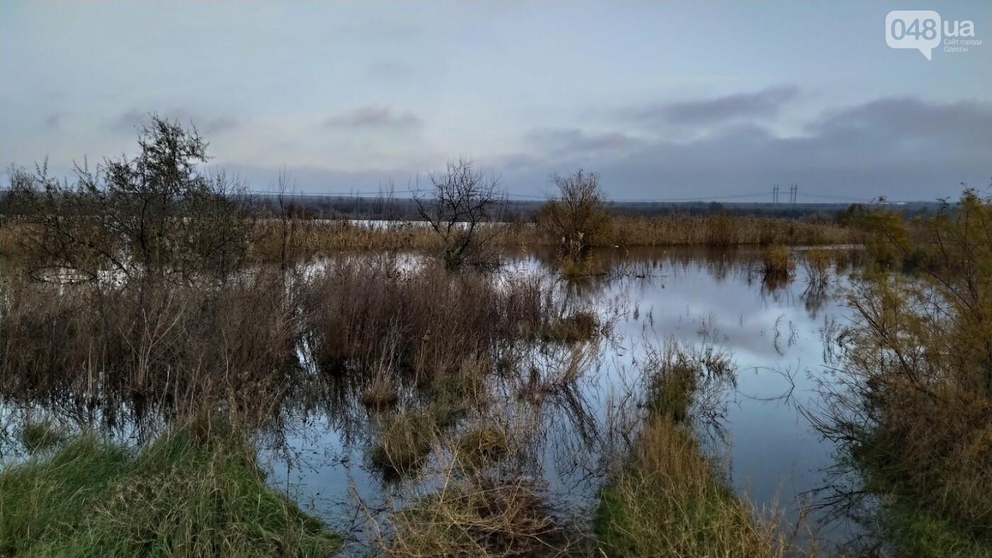 Затопленные, деревья и дороги: в Одесской области водохранилище вышло из берегов, - ФОТО, фото-7, ФОТО: Александр Жирносенко