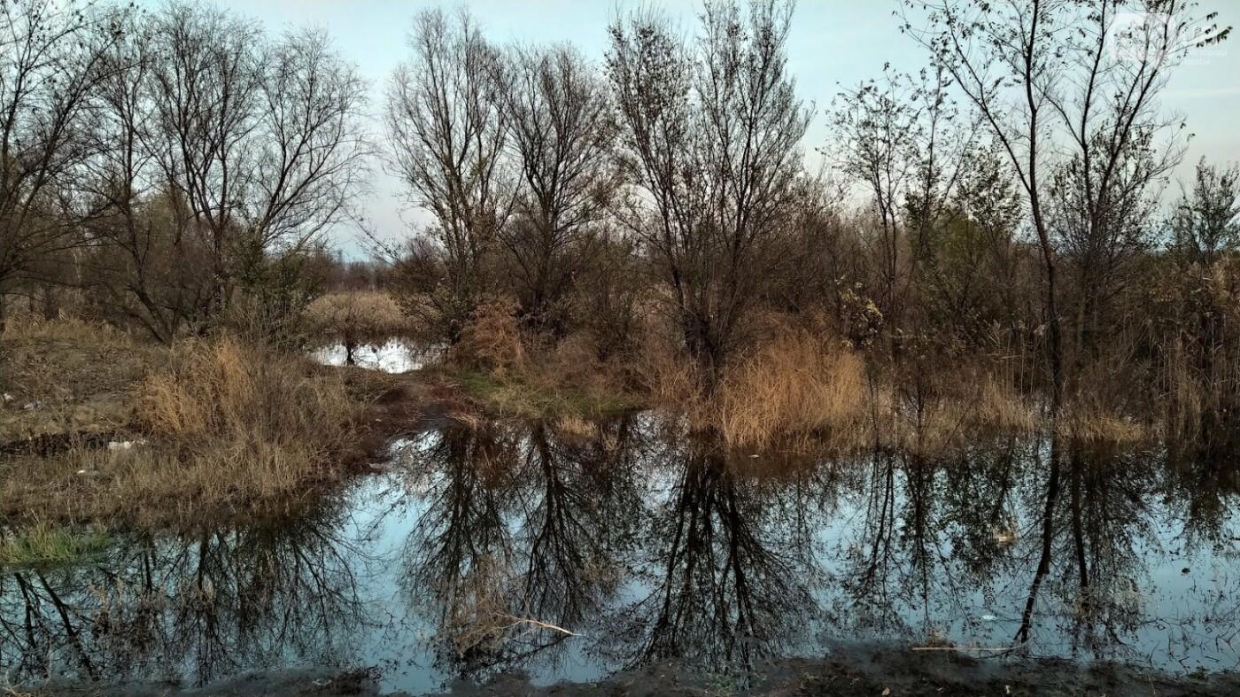 Затопленные, деревья и дороги: в Одесской области водохранилище вышло из берегов, - ФОТО, фото-5, ФОТО: Александр Жирносенко