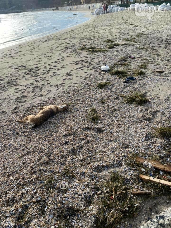 Из-за новогодних салютов и фейерверков погибли животные, - ФОТО, фото-1