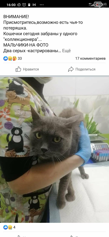 В Одессе психически нездоровый мужчина собирает домашних котов в сумку и несет домой, - ФОТО, фото-1
