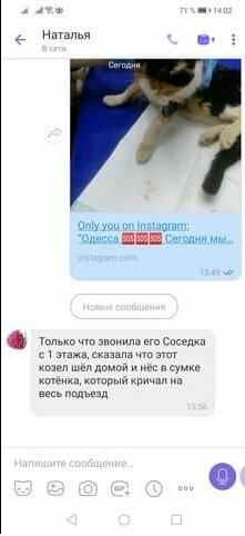 В Одессе психически нездоровый мужчина собирает домашних котов в сумку и несет домой, - ФОТО, фото-3