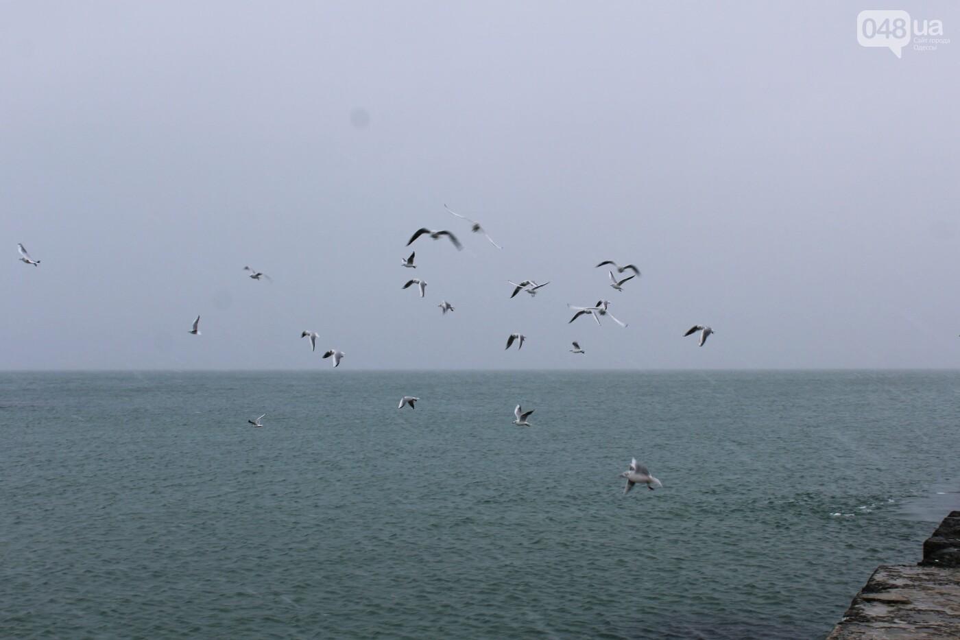 В Одессе побережье засыпало снегом: утки, котики и море, - ФОТОРЕПОРТАЖ, фото-12