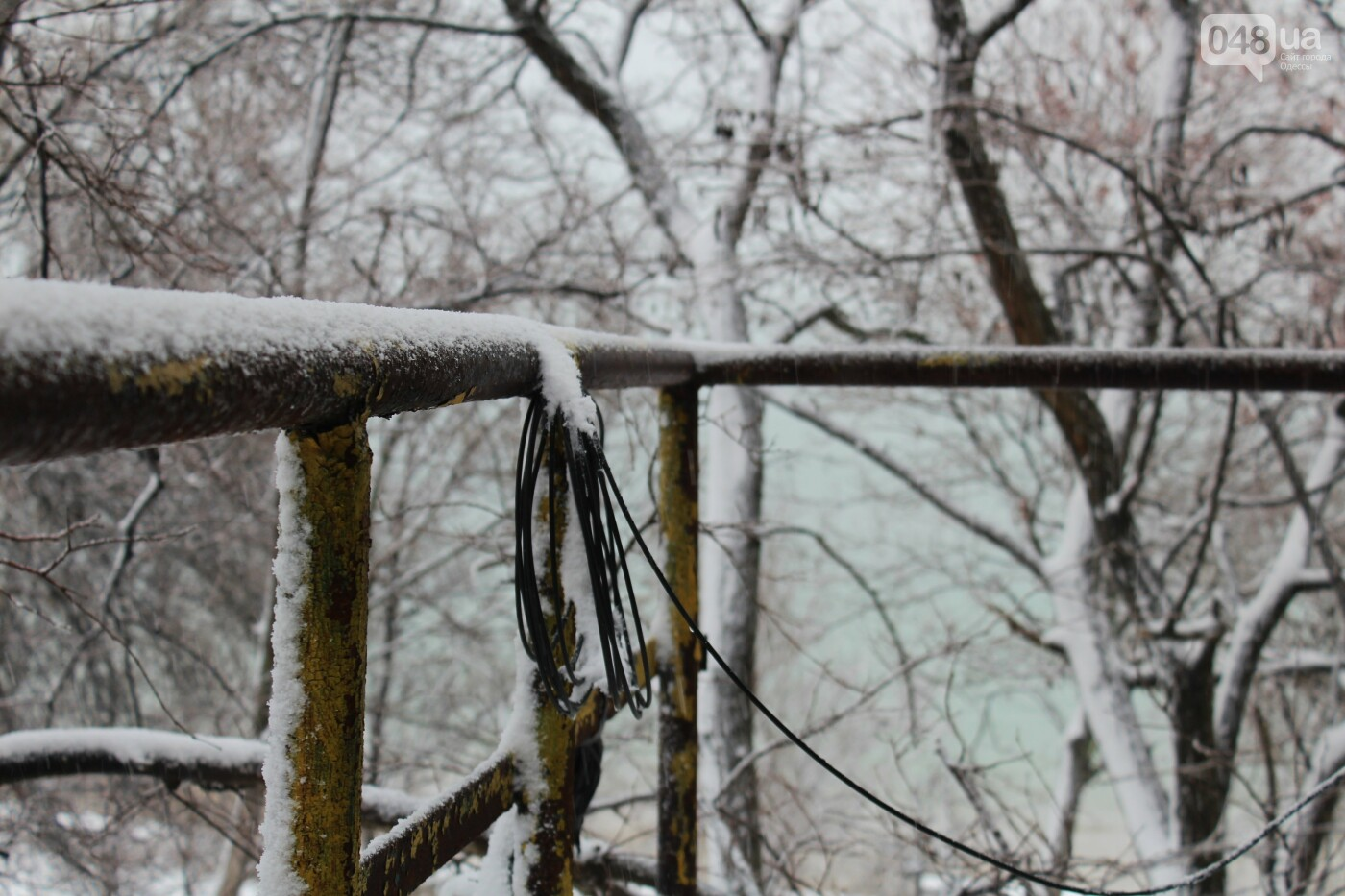 В Одессе побережье засыпало снегом: утки, котики и море, - ФОТОРЕПОРТАЖ, фото-25