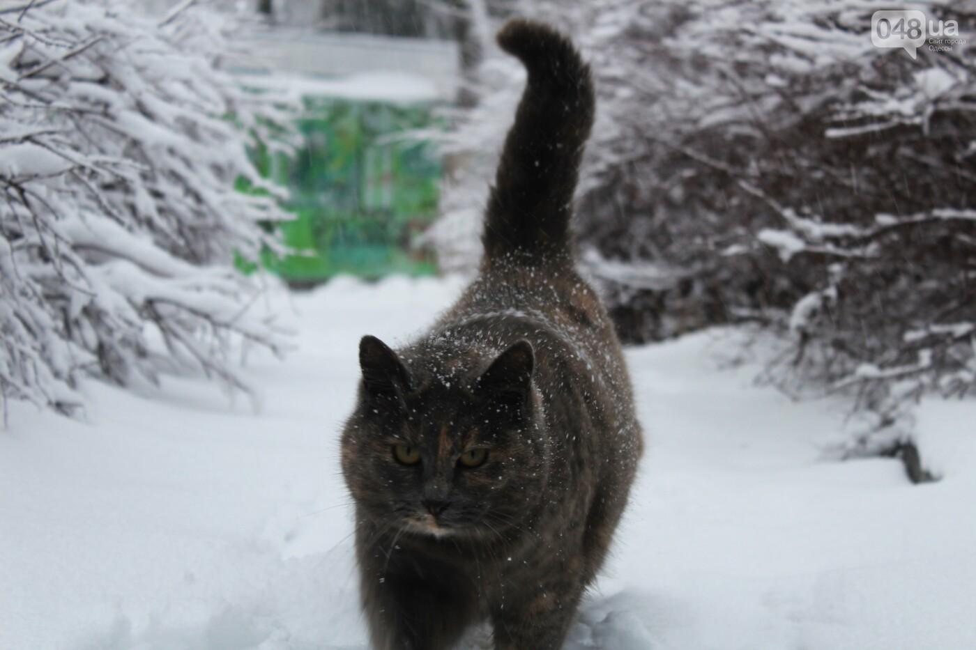 В Одессе побережье засыпало снегом: утки, котики и море, - ФОТОРЕПОРТАЖ, фото-17
