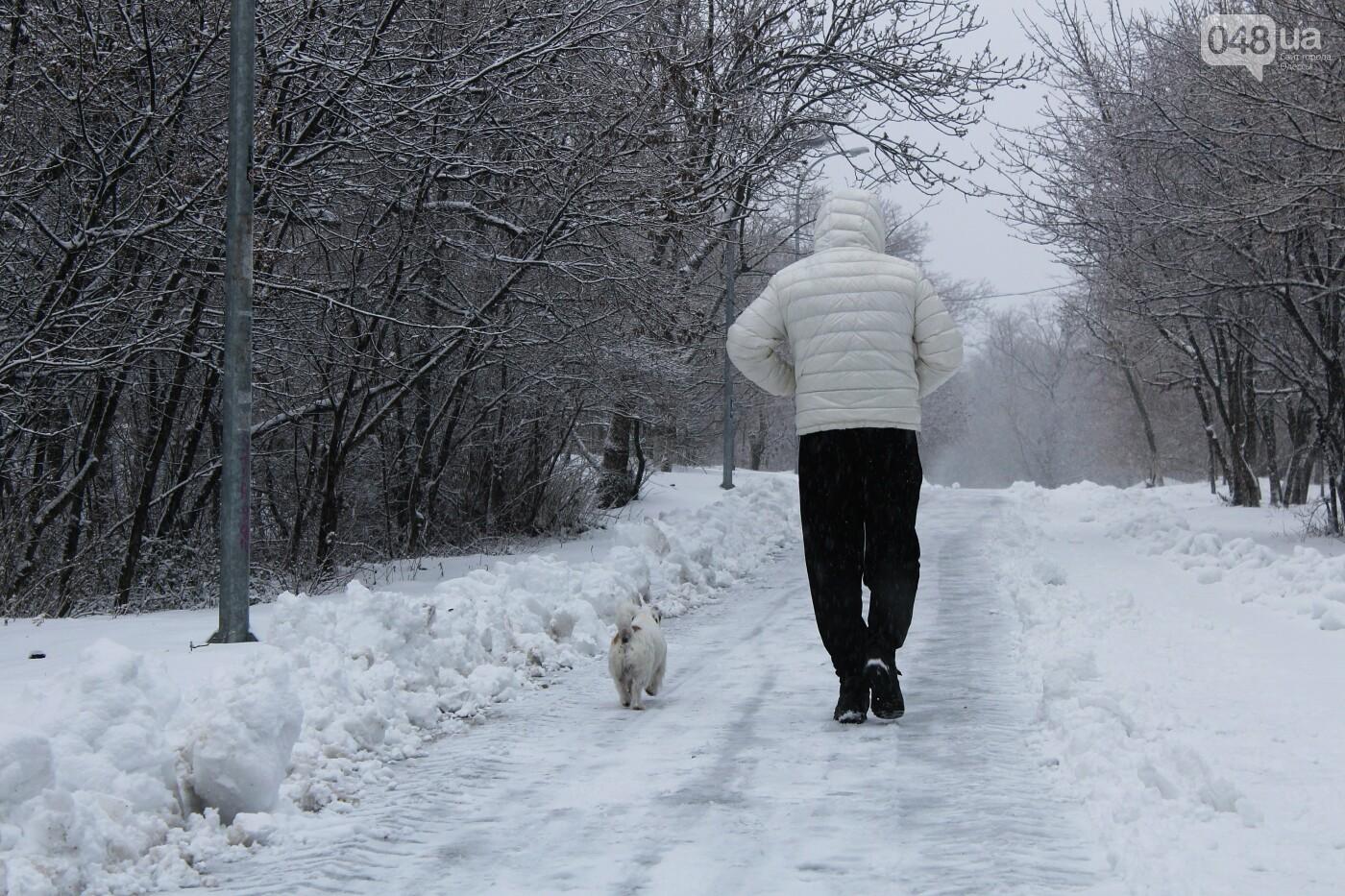 В Одессе побережье засыпало снегом: утки, котики и море, - ФОТОРЕПОРТАЖ, фото-15