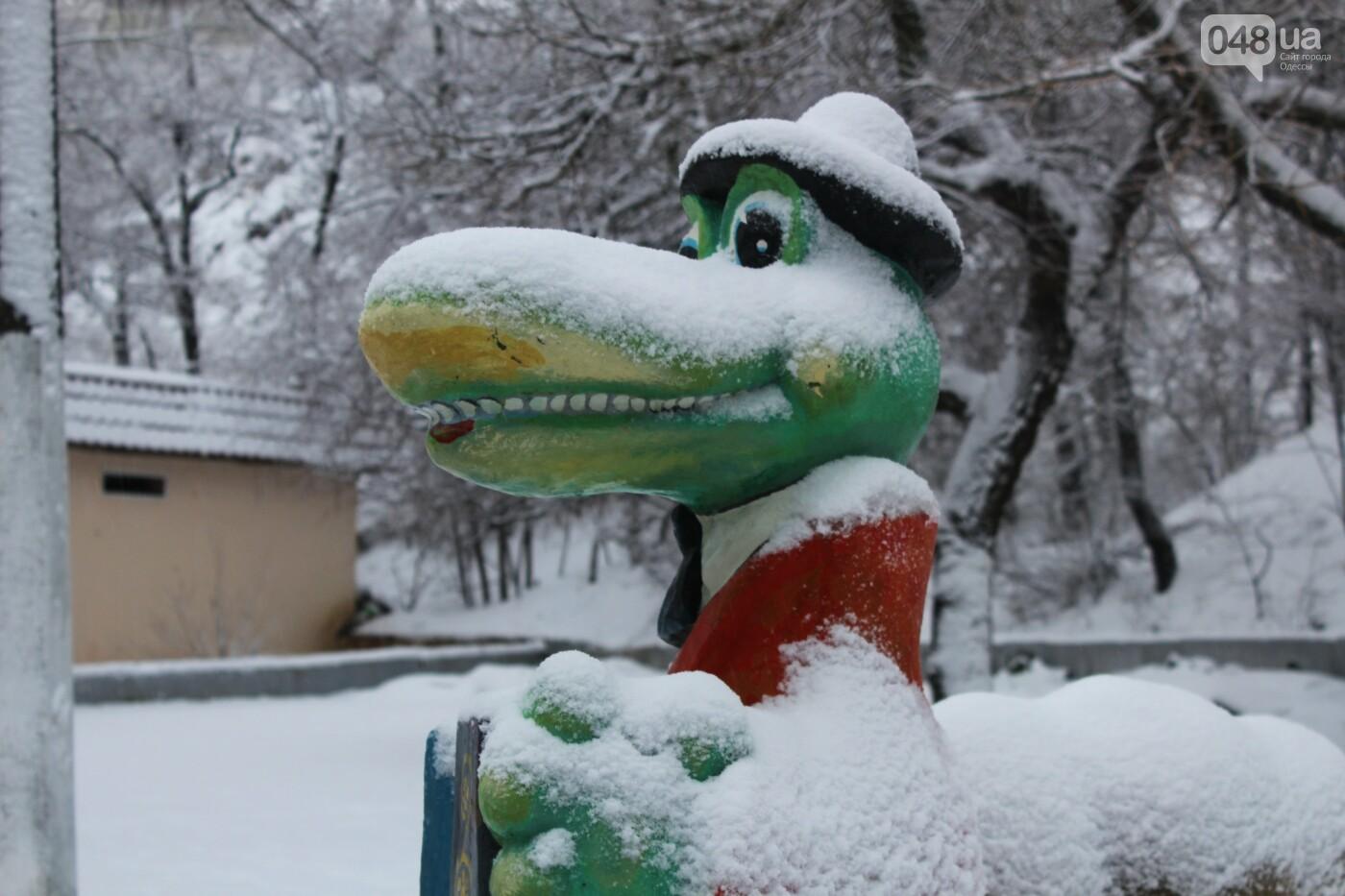 В Одессе побережье засыпало снегом: утки, котики и море, - ФОТОРЕПОРТАЖ, фото-27