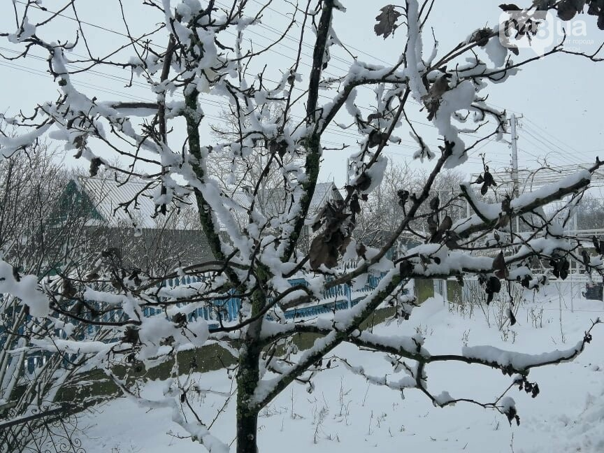 Сугробы выше крыши: жители Одесской области откапываются,-..., фото-1616