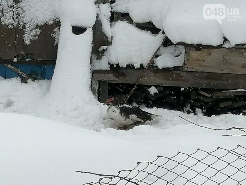 Сугробы выше крыши: жители Одесской области откапываются,-..., фото-66