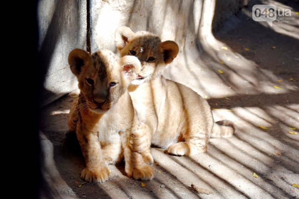 """""""У меня есть ощущение, что это я тигра родил"""": интервью с директором одесского зоопарка Игорем Беляковым, фото-4"""