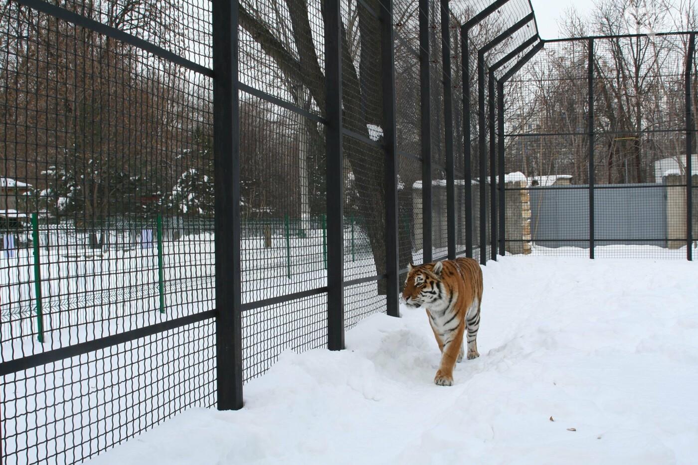 """""""У меня есть ощущение, что это я тигра родил"""": интервью с директором одесского зоопарка Игорем Беляковым, фото-1"""