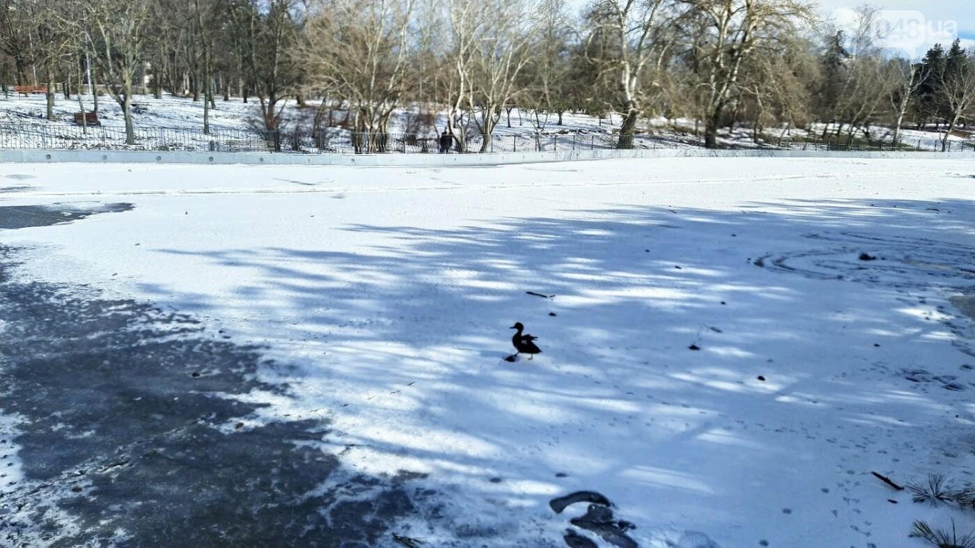 На замерзшем пруду в Одесском парке устроили спортивные состязания, - ФОТО, фото-21, ФОТО: Александр Жирносенко.