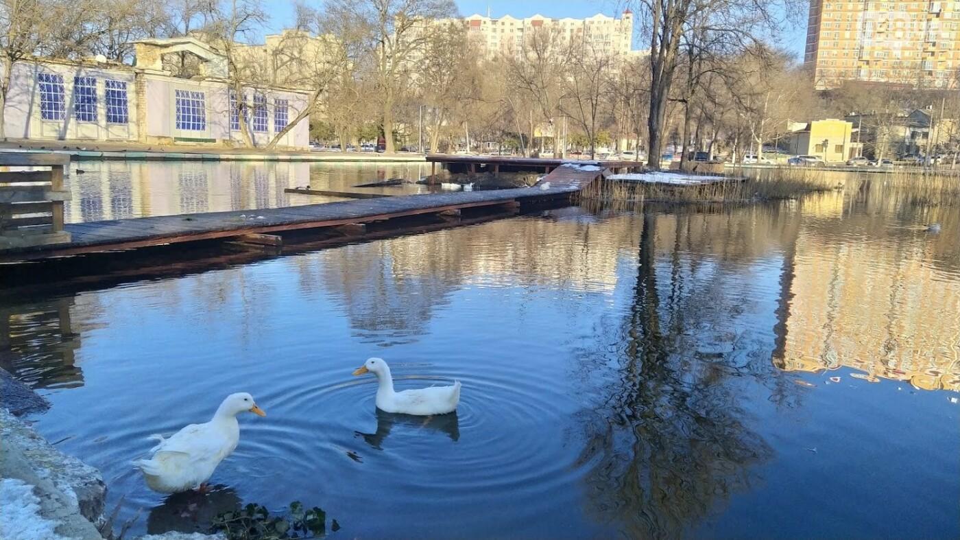 Фотопятница в Одессе: февральские морозы в Южной Пальмире, - ФОТО, фото-39, ФОТО: Александр Жирносенко