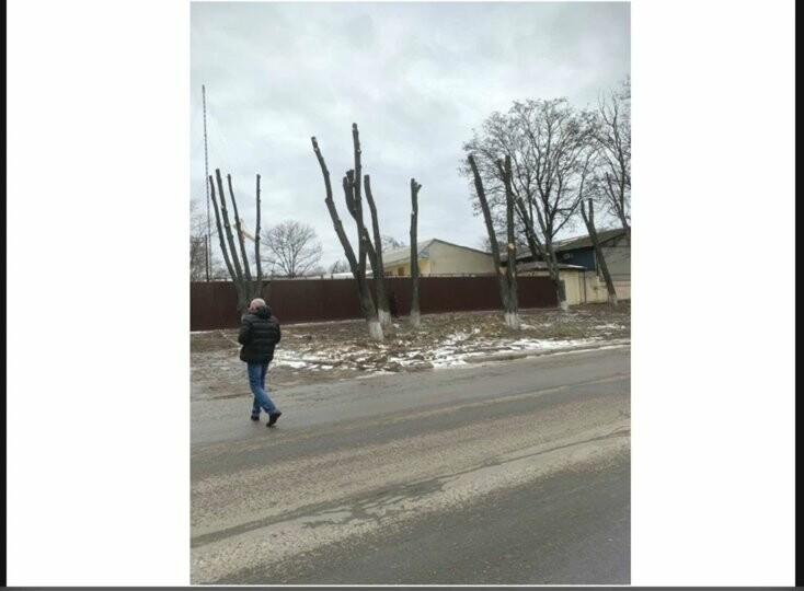 Одесский супермаркет незаконно спилил около 20 деревьев на Слободке, - ФОТО, фото-1