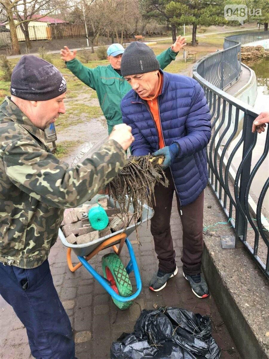 В Одессе на пруду в парке Победы расцветут кувшинки,- ФОТО, фото-1