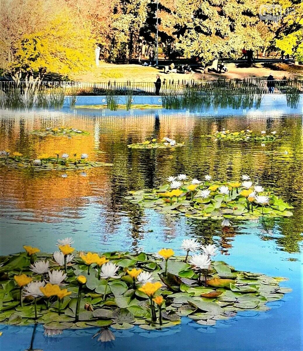 В Одессе на пруду в парке Победы расцветут кувшинки,- ФОТО, фото-3